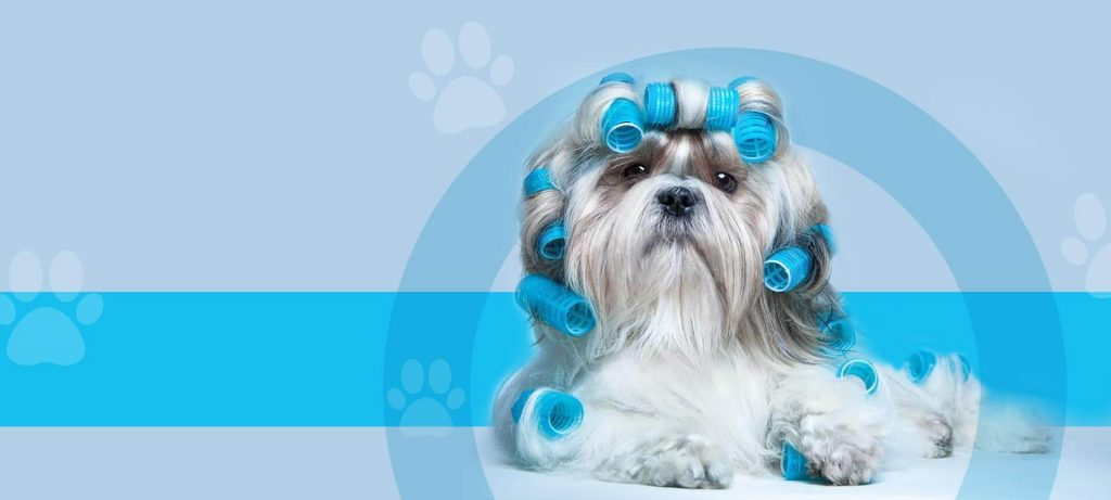 Importance Of Pet Grooming Services